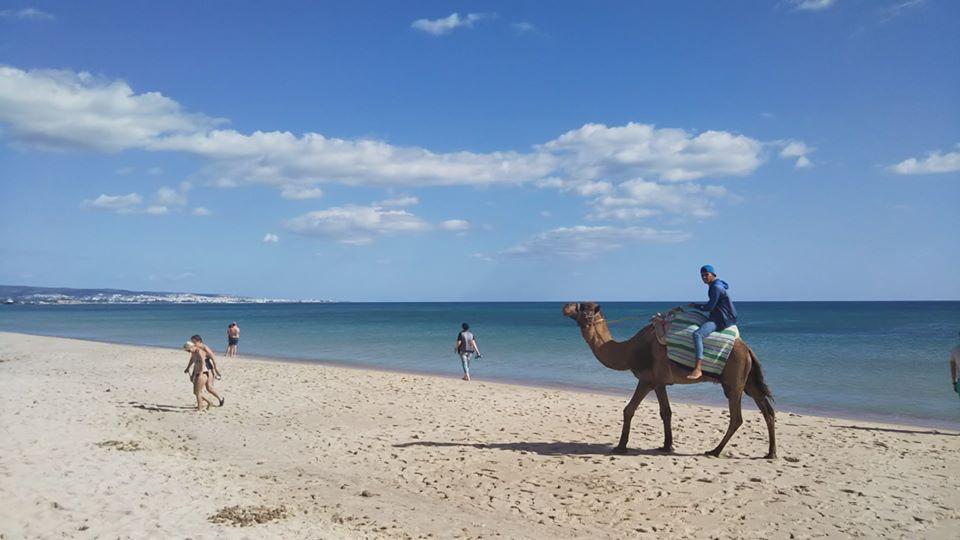 チュニジアの碧い海🌊砂浜の謎の物体は何❓